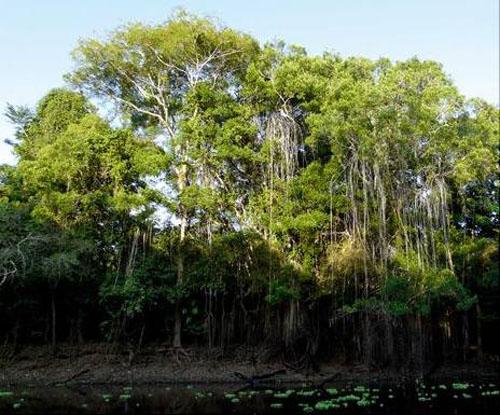 新闻 亚马逊:五彩缤纷的植物世界 危险神秘的动物王国    亚马逊森林图片